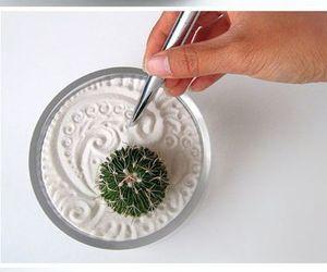 cactus, diy, and garden image