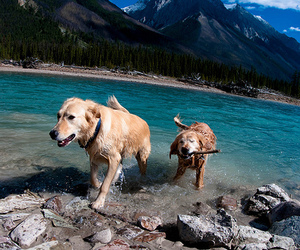 dogs, water, and friends image