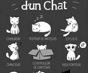 cat, chat, and cute image