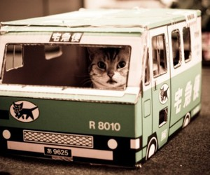 cat, bus, and funny image
