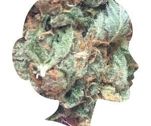 weed and maconha image