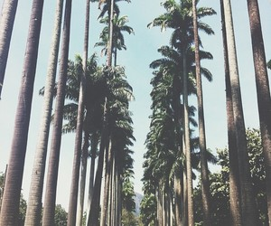 hipster, palm trees, and palms image