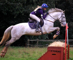cross country, horse, and horse riding image