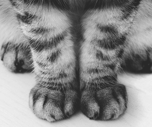 cat, foot, and meow image