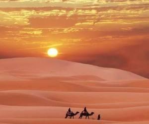 desert, sunset, and camel image