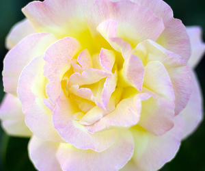 inspiration, pink, and rose image