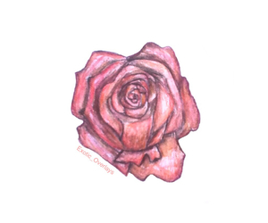 drawn, flower, and hand drawn image