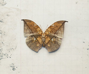 retro, vintage, and butterfly image
