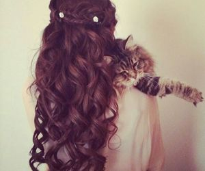 cat, curly, and hair image
