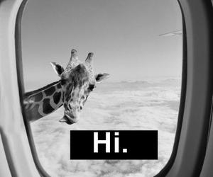 giraffe, hi, and funny image