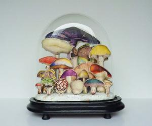 mushrooms image
