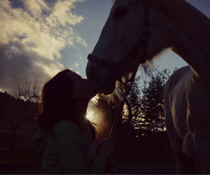 horse, love, and Sonne image