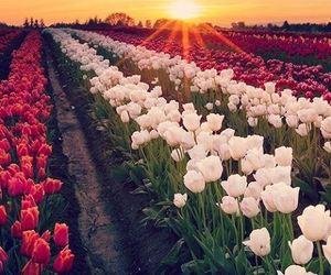 flowers, beautiful, and sunset image