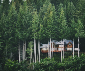 forest, nature, and house image