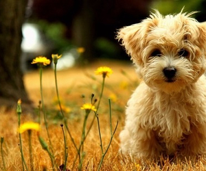 animals, summer, and poodle image