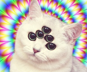 cat, eyes, and trippy image