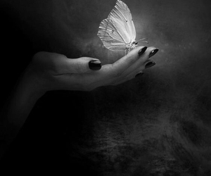 butterfly, hand, and monotone image