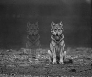 balck and wolf image