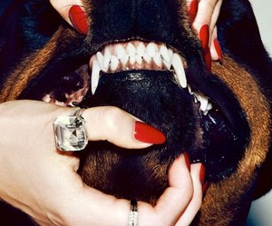 dog, red nails, and teeth image