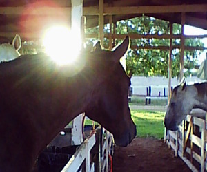 country, horse, and haras image