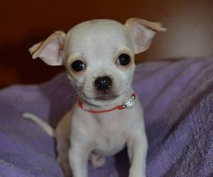baby, beautiful, and dog image