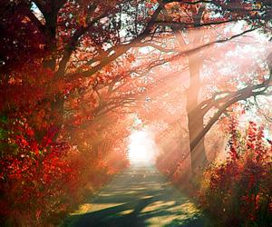 forest, landscape, and sunset image