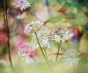 beautiful, flowers, and white flowers image