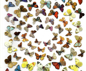 animals and butterfly image