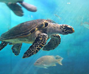 ocean, turtle, and vacation image