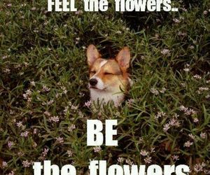 flowers, dog, and funny image