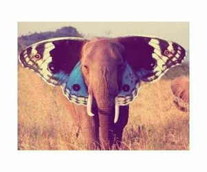 elephant, butterfly, and beautiful image