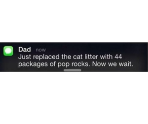 cats, post, and dad image
