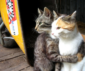 cat, animal, and hug image