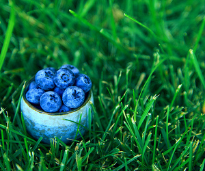 berries, blueberries, and summer image