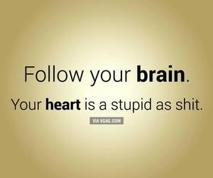 brain, heart, and stupid image