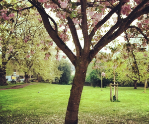 cherry blossom, flowers, and garden image