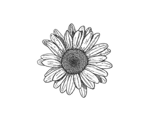 daisy, flower, and simple image