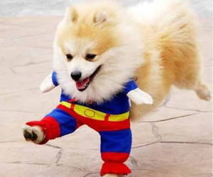 dog, cute, and superman image