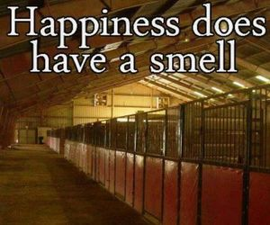equestrian, happiness, and horse image