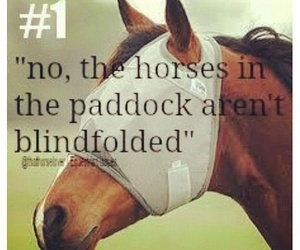 equestrian, quote, and horse image
