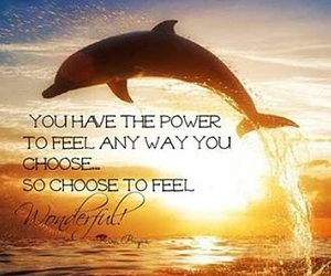 dolphin, quote, and summer image