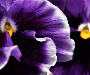 flower, orchid, and purple image