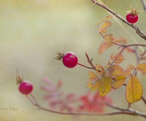 autumn, fall, and textured image
