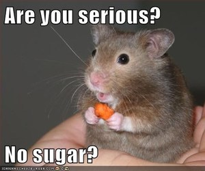 carrot, food, and hamster image