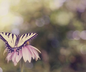 butterfly and nature image