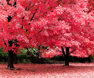 tree, pink, and nature image