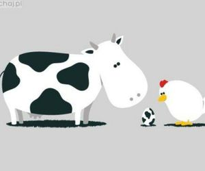 cow, egg, and hen image