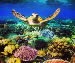 sea, turtle, and underwater image