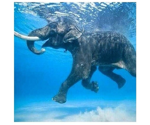 elephant, swimming, and animal image