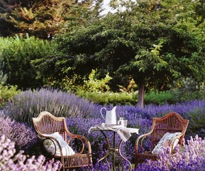lavender, flowers, and garden image